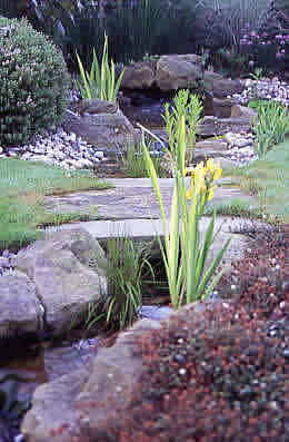 garden design, water garden, rill, Acaena microphylle, New Zealand Burr, Iris pseudoacorus, bridge