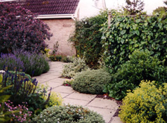 paving and plants enhance an entrance garden